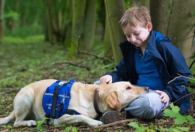 Kako psi pomažu bolesnicima