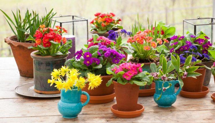 Cvijeće u vašem domu
