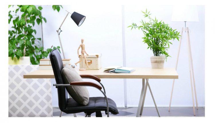 Idealne biljke za vašu kancelariju