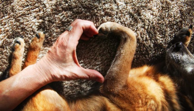 Više volimo pse nego ljude?
