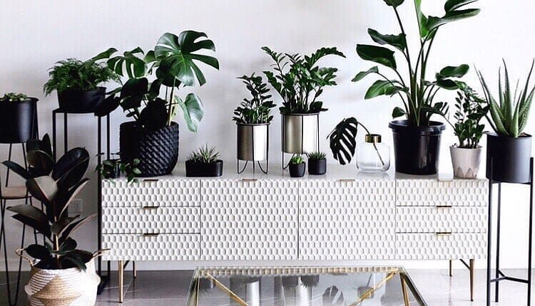 Kutak za biljke