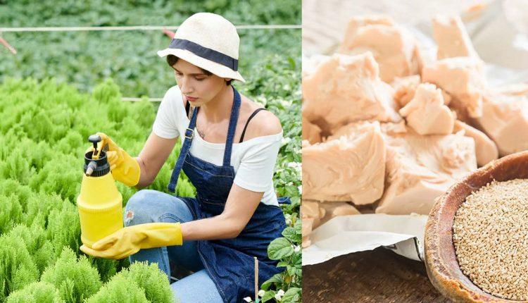 Germa za zdravije i ljepše biljke