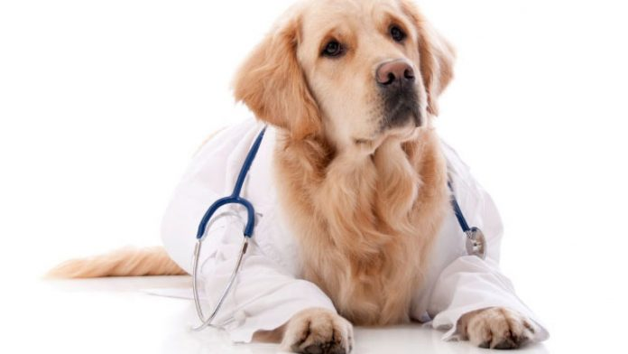 Kako psi upozoravaju na zdravstvene probleme